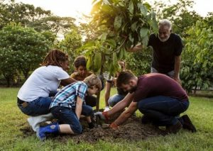 a group of people planting a tree